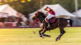 Polo real Foto de Stock Royalty Free