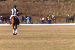 Polo Referee Rider Horse Play handling Royaltyfria Bilder