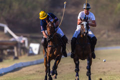 Polo Rider Horse Play Action Arkivbilder