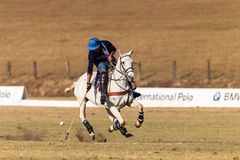 Polo Rider Horse Play Action Fotografia de Stock Royalty Free