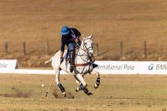 Polo Rider Horse Play Action Fotografia Stock Libera da Diritti