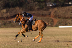 Polo Rider Horse Play Action Fotografia de Stock