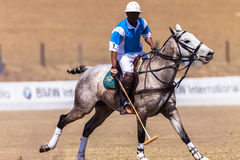 Polo Rider Horse Play Action Royaltyfri Fotografi