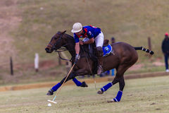 Polo Rider Pony Ball Galloping Stock Images