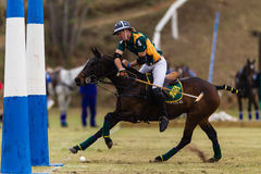 Polo Rider Pony Ball Goals Action Images stock