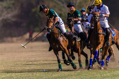 Polo Riders Horses Play Action Arkivfoton