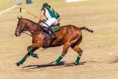 Polo Riders Horses Play Action Fotografering för Bildbyråer