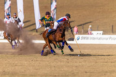 Polo Riders Horses Play Action Imagem de Stock Royalty Free