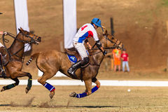 Polo Riders Horses Play Action Royaltyfria Foton
