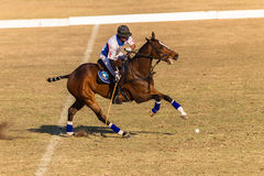 Polo Riders Horses Play Action Fotos de Stock