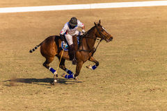 Polo Riders Horses Play Action Imagem de Stock