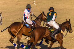 Polo Riders Horses Play Action Fotografia Stock