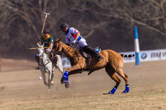 Polo Riders Horses Play Action. Polo Players and horse ponies in action with USA plays South Africa games at Shongweni equestrian grounds Hillcrest outside Stock Images