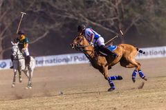 Polo Riders Horses Play Action Stock Image