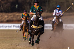 Polo Riders Horses Play Action. Polo Players and horse ponies in action with USA plays South Africa games at Shongweni equestrian grounds Hillcrest outside Royalty Free Stock Photo