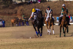 Polo Riders Horses Play Action. Polo Players and horse ponies in action with USA plays South Africa games at Shongweni equestrian grounds Hillcrest outside Royalty Free Stock Image