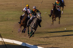 Polo Riders Horses Play Action. Polo Players and horse ponies in action with USA plays South Africa games at Shongweni equestrian grounds Hillcrest outside Stock Image