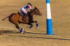 Polo Riders Horses Play Action Stock Photos