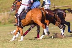 Polo Riders Horses Unidentified Game-Actie Royalty-vrije Stock Afbeeldingen