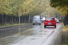 An POLO running along  Ginkgo Road in Jiaxing City Royalty Free Stock Photography