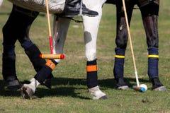Polo Sport royaltyfria bilder