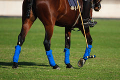 Polo sport Stock Images