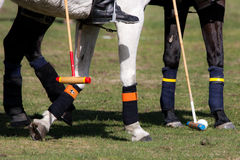 Polo sport Royalty Free Stock Images