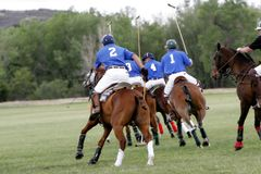 Polo Team Chasing. A Polo team chases after a shot during a Polo match (focus point on foreground player stock photo