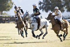 Polo Tournament Four. Four riders on galloping horses in a tournament at El Dorado Polo Club stock photo