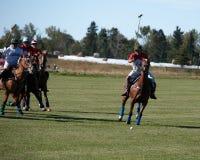 Polo in Zwart Diamond Polo Club royalty-vrije stock foto