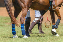 Polocrosse Horse Players Closeup Boots Rackets Royalty Free Stock Photography