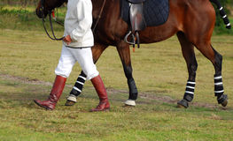 Polocrosse player with horse royalty free stock image