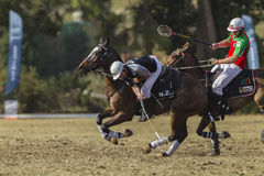 Polocrosse Riders Action royalty free stock images