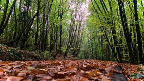 Polonezköy forest path. A free tour on a rainy and moisture day in Polonezkoy forest Stock Photography