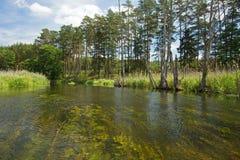 polonia Río de Brda en verano Visión horizontal Foto de archivo libre de regalías