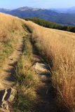 Polonina Carynska kulle i Bieszczady berg i sydostliga Polen - den Bieszczadzki nationalparken Arkivbild