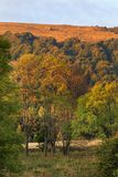Polonina Carynska kulle och Prowcza dal i Bieszczady berg i sydostliga Polen Royaltyfria Bilder