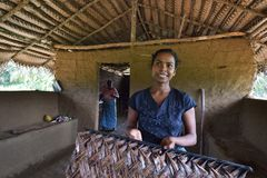 Polonnaruwa,斯里兰卡, 2015年11月8日:Sri Lankian妇女提出了她的工作 库存照片