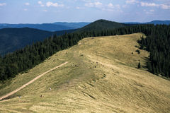 Polonyna in the Carpathians Royalty Free Stock Images