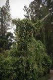 polos Árvore-cobertos Fotografia de Stock