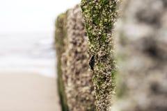 Polos ásperos do molhe na praia Foto de Stock