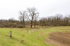 Polos da execução perto da floresta de Auid fotografia de stock royalty free