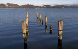 Polos de madeira no lago Massaciuccoli de Torre del Lago Puccini, Lucca, Toscânia, Itália Fotografia de Stock