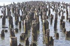Polos de madera Fotos de archivo libres de regalías