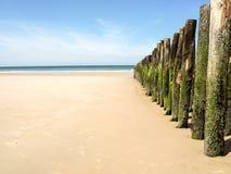 Polos de madera de la playa con el musgo en una playa en Francia septentrional imagen de archivo