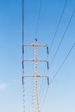 Polos de poder com fios Fotografia de Stock
