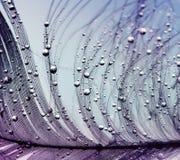 Polotny tło czarodziejski piękny pióro w bzie i błękicie Obraz Stock