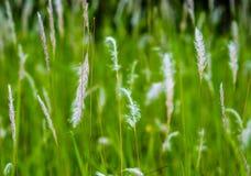 polowa wysoka trawa trawy tła green miły xxl natury fotografia stock