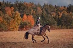 Polowanie z jeźdzami w jeździeckim przyzwyczajeniu Zdjęcia Royalty Free