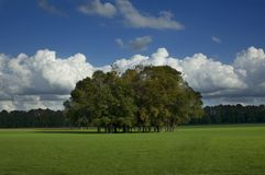 polowe drzewa traw Obrazy Stock